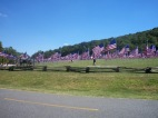 Field of Flags3